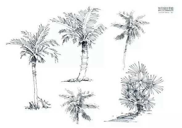 植物配景手绘上色