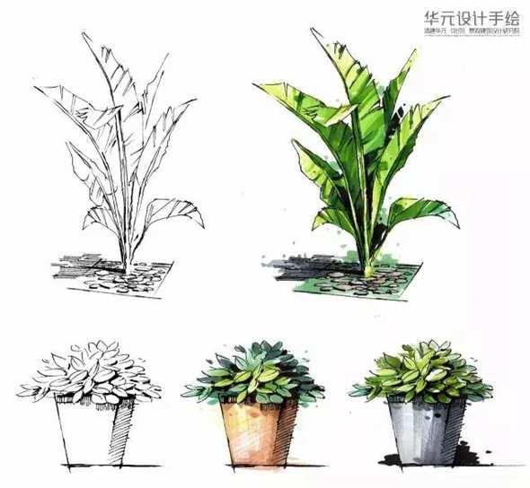 景观盆栽线稿手绘